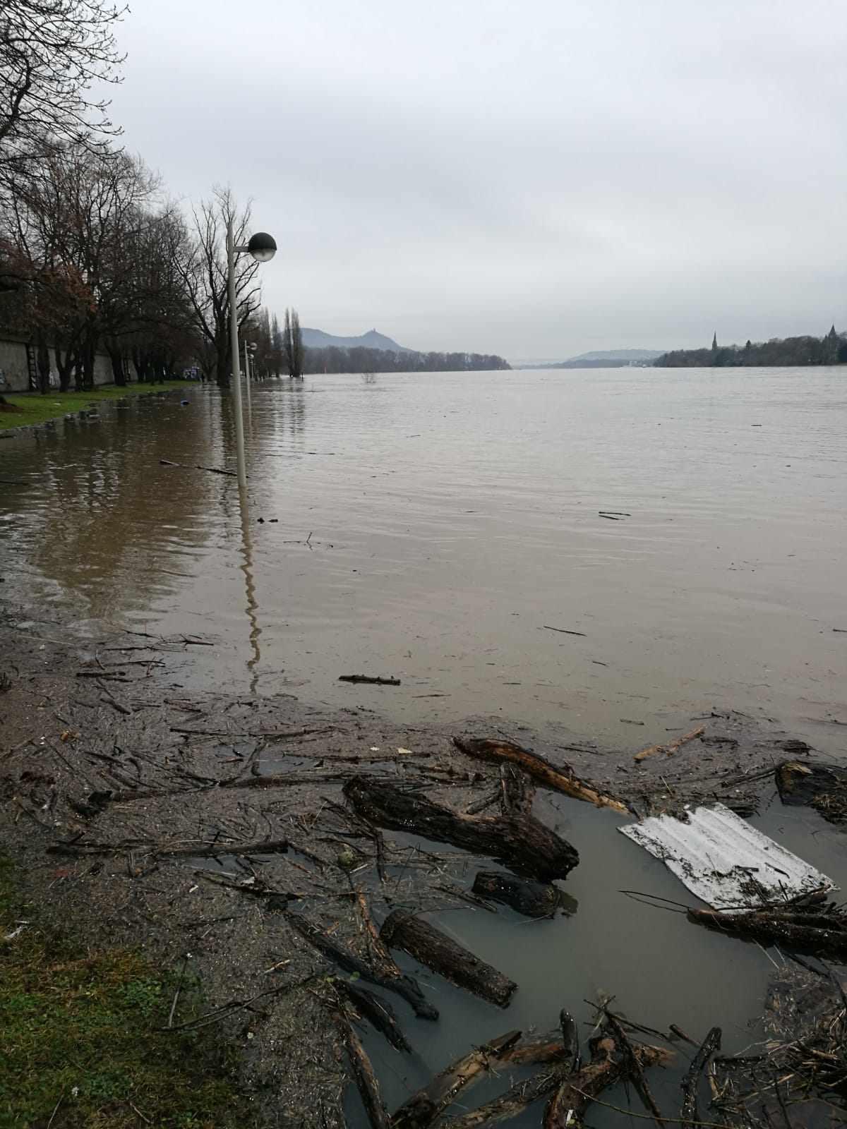 Rhein bei Oberkassel - Hochwasser
